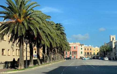 Desde el ayuntamiento de Ciutadella recuerdan los beneficios de los árboles en la ciudad
