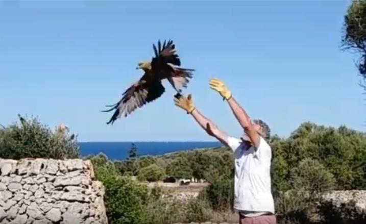 Imagen del vídeo que ha hecho público el GOB Menorca