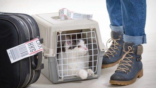 Viaje con un gato.