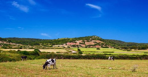 Imagen del campo menorquín (Foto: Turisme de les Illes Balears)