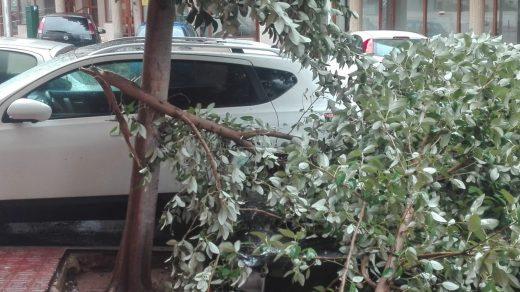 La caída de árboles está afectando, sobre todo, al norte de la isla