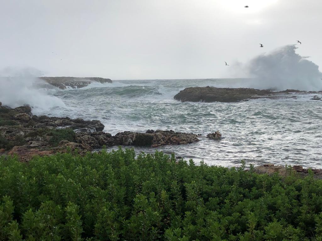Temporal en la costa sur (Fotos y vídeo: Tolo Mercadal)