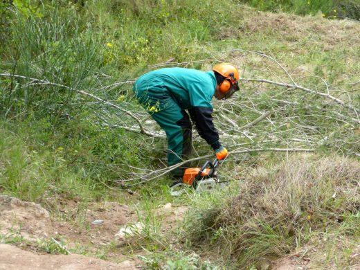 Operarios de Endesa limpiando la masa forestal