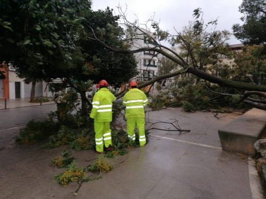 Árboles caídos debido al temporal (Foto: Ajuntament de Maó)