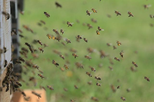 El proyecto Mellisphera mejora la supervivencia de la colmena