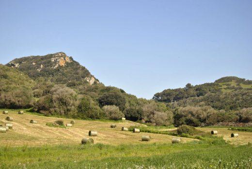 Imagen del campo de Menorca (Foto: Tolo Mercadal)