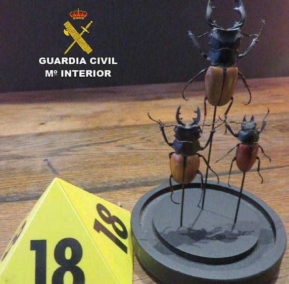 20191223 escarabajos
