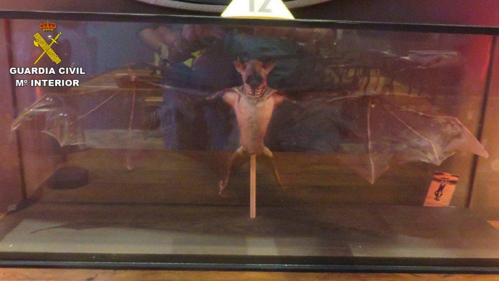 Un murciélago entre los animales disecados que estaban a la venta (Fotos: Guardia Civil)