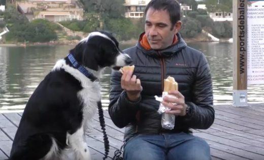 Imagen del vídeo elaborado por el Consell y las protectoras de animales