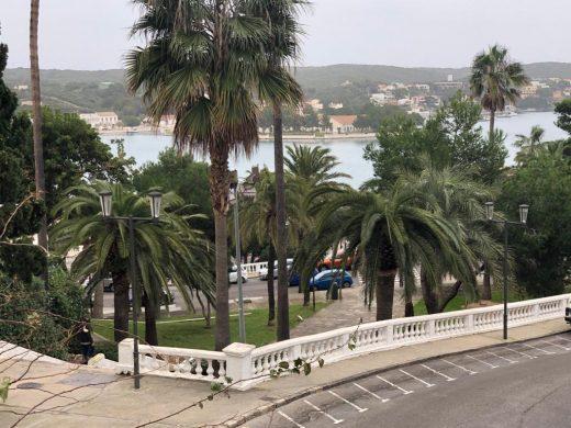 """Rochina es una de las zonas afectadas por el """"picudo rojo"""""""