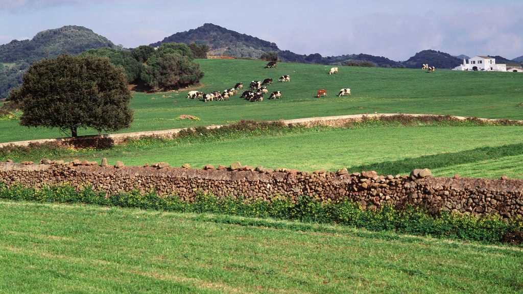 Muchasds fincas de Menorca forman parte del programa de custodia agraria (Foto: Turismo de Menorca)