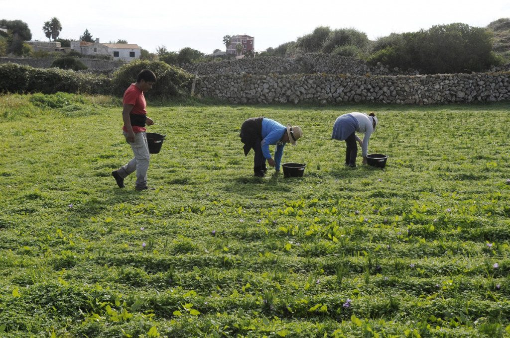Unió de pagesos pone el acento en las dificultades que padecen