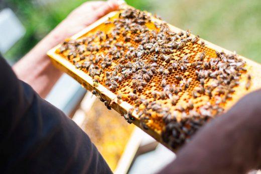 Miel de verdad, miel de Menorca