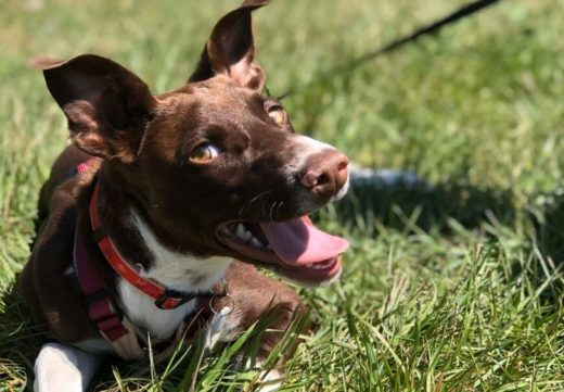 """Desde la protectora exponen que actualmente tienen más perros de lo normal """"en el limbo"""", lo que ocasiona un aumento de gastos y responsabilidad."""