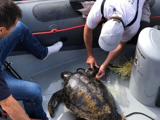 Al rescate de la tortuga