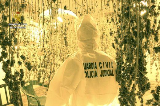 Imagen de la plantación (Foto: Guardia Civil)