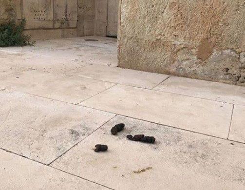 (Fotos) El triste regreso al trabajo en el Museu de Menorca
