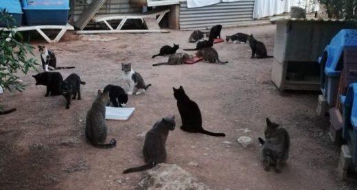 Imagen de los gatos en el refugio de la ciudad de Ponent.