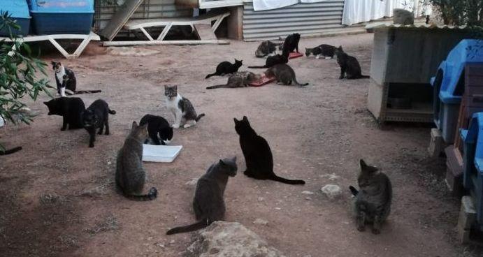 Imagen de los gatos en el refugio actual de Ciutadella