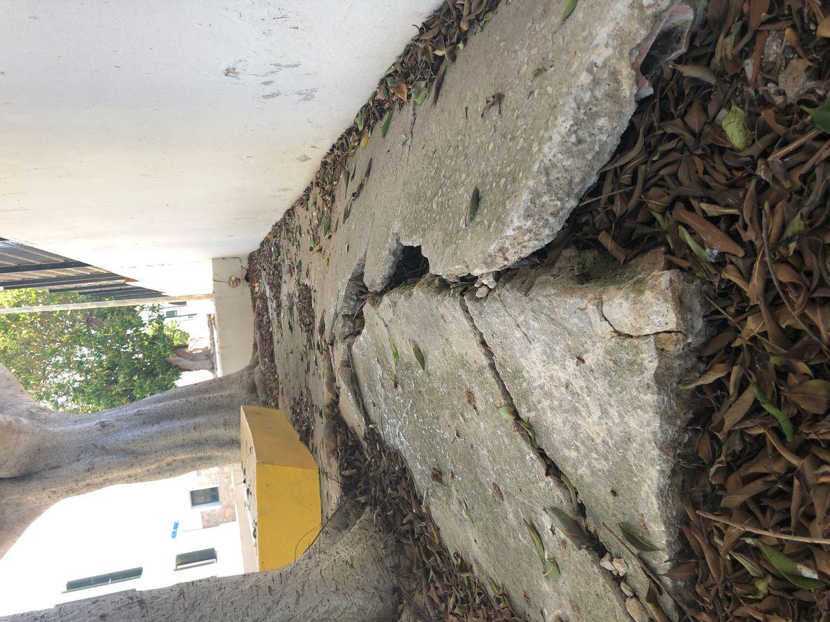 Imagen de los desperfectos ocasionados por los árboles (Foto: Aj. Sant Lluís)