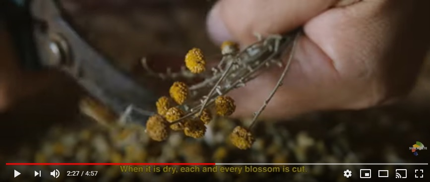 """Imagen del vídeo """"Camomila y miel de Menorca. Hijas del sol"""""""