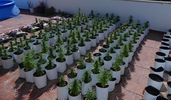 Una imagen de la plantación.