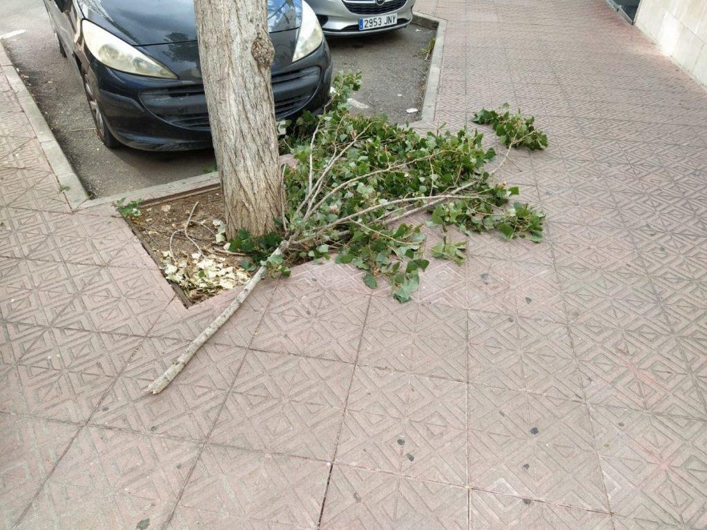 Comienzan a caer las ramas de los árboles por la fuerza del viento