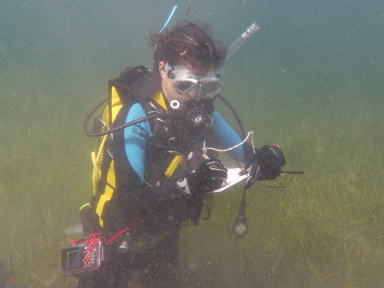 Trabajo de campo en la bahía de Fornells (Imagen: OBSAM)