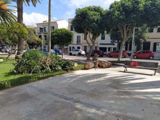 (Fotos) El viento derriba una palmera en s'Esplanada de Maó y chafa un coche