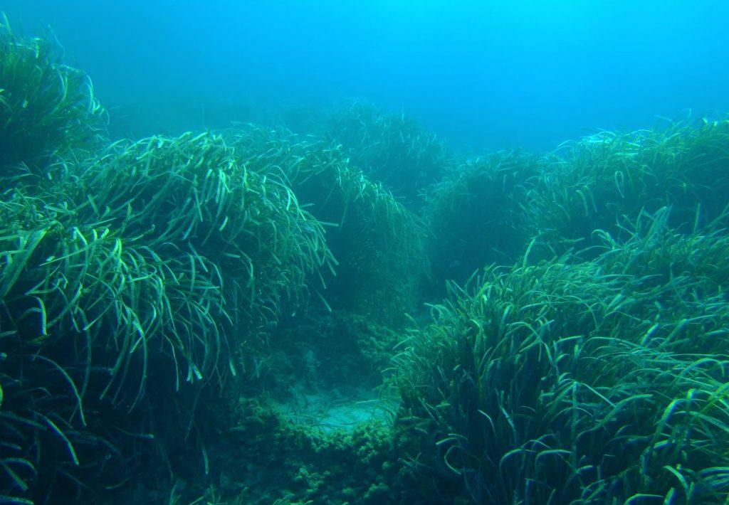 ASMEN cree que la sentencia permite el disfrute de la costa sin que suponga un menoscabo en la protección del medio marino (Foto: GOB)