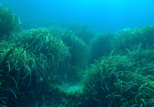 El objetivo es compatibilizar el uso turístico marino con la conservación de los espacios marinos protegidos (Foto: GOB)