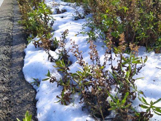 (Fotos) Los restos de la granizada que descargó sobre Alaior