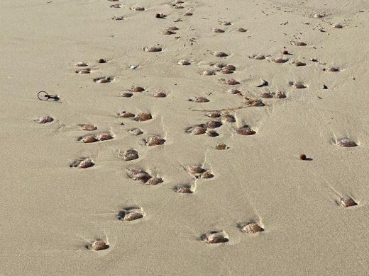 Día de contrastes en Son Bou: parapente en el cielo y medusas en la arena
