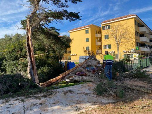 Árbol caído en la carretera de Maó a Sant Lluís (Foto: Tolo Mercadal)