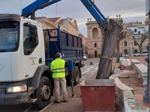 (Fotos) Ciutadella cambia otros seis árboles de la plaça des Born