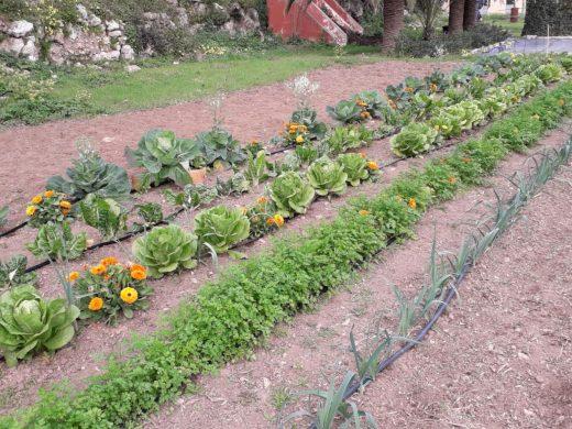Crean una nueva reserva de semillas ecológicas autóctonas en Menorca