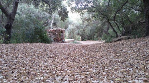 Imagen del bosque de Alforí de Dalt publicada en sus redes sociales
