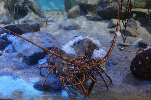 Del fondo del mar al vivero