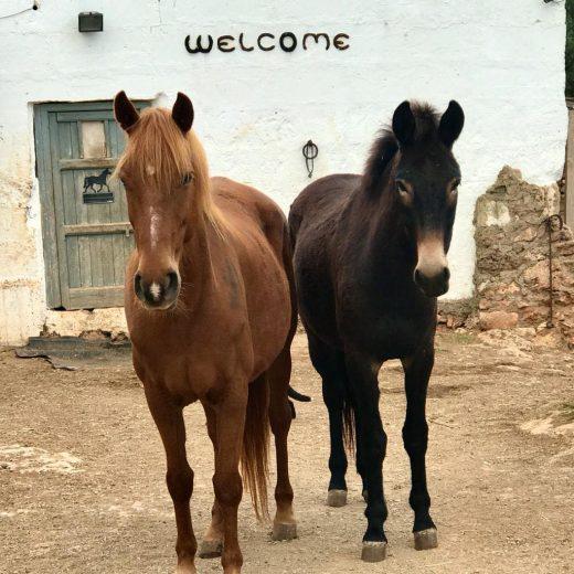 Dos caballos en el refugio.