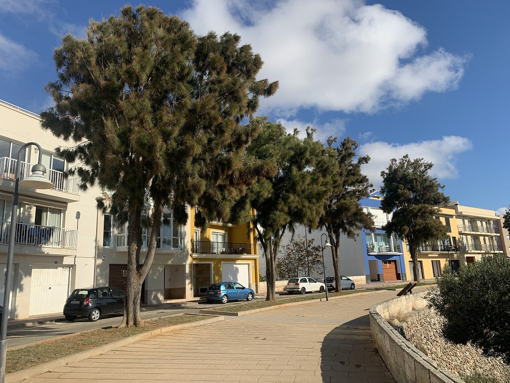 En las calles de Ciutadella que tengan aceras estrechas no se plantarán árboles