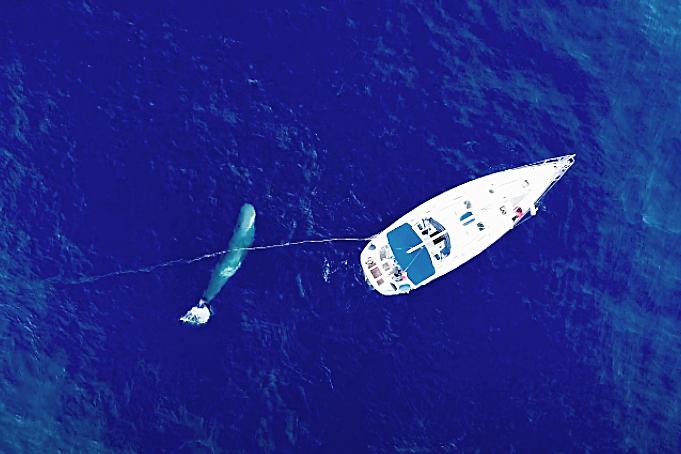 Imagen de Tursiops, fundación que trabaja en la conservación del cachalote