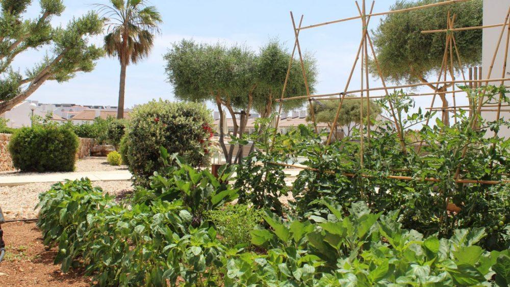 Un huerto orgánico.