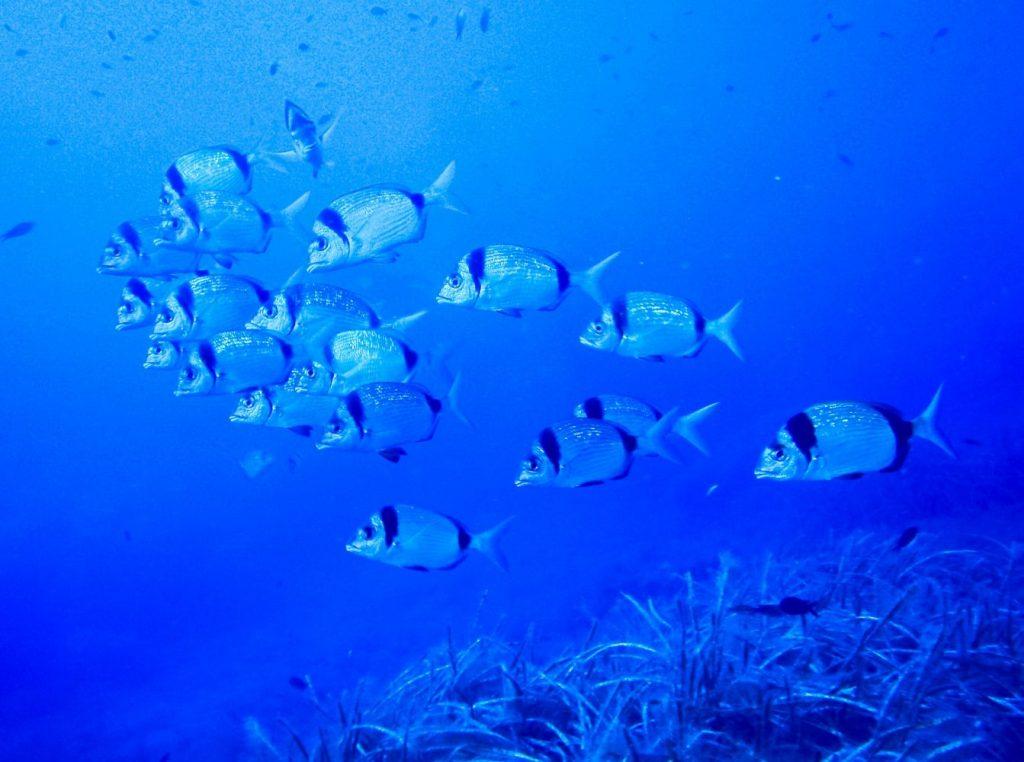Más peces.