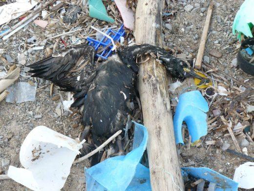 """Un """"cagaire"""" muerto entre basura en la orilla del mar (Foto: Marta Pérez)"""