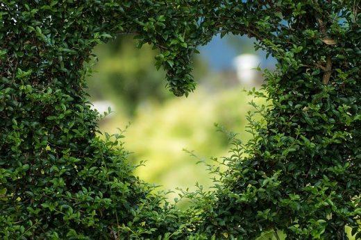Un jardín para amarlo