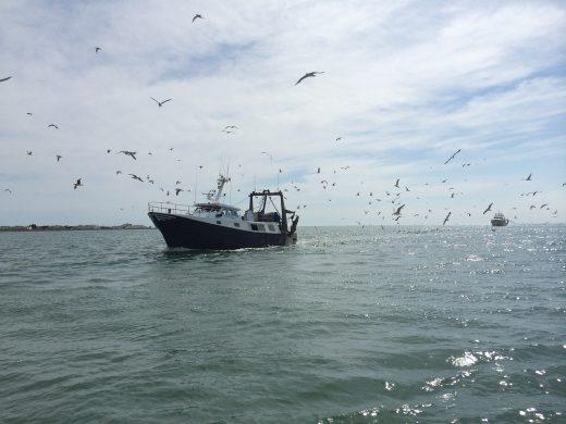 Las medidas se desarrollan en colaboración con los pescadores (Imagen de CHRISTINE GAYET en Pixabay)