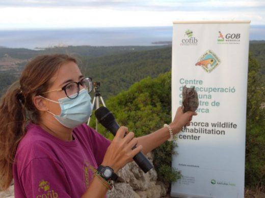 (Vídeo y fotos) Voluntarios liberan ocho búhos en Monte Toro