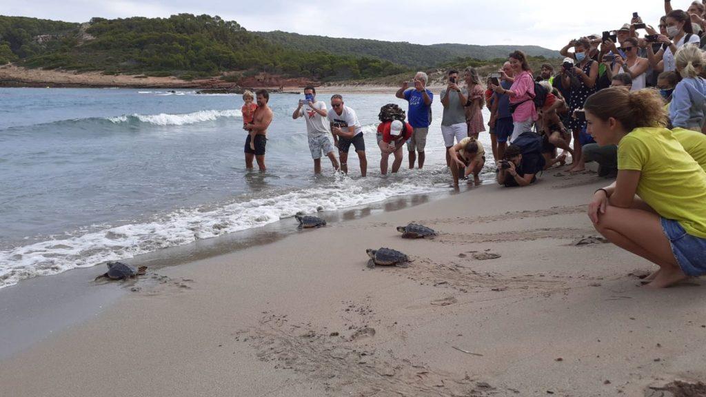 La Vall esta mañana, escenario del recorrido de las tortugas al mar