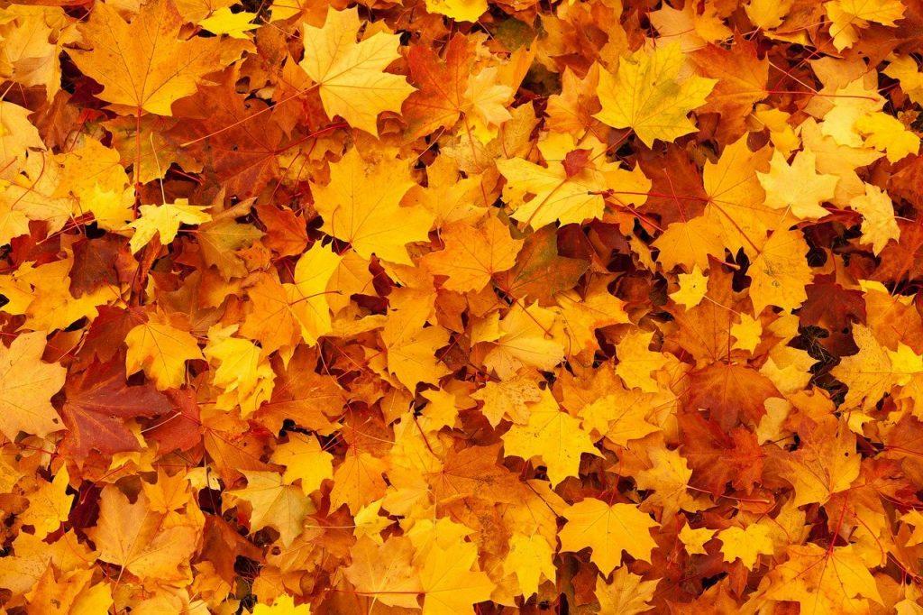 Típica imagen de otoño