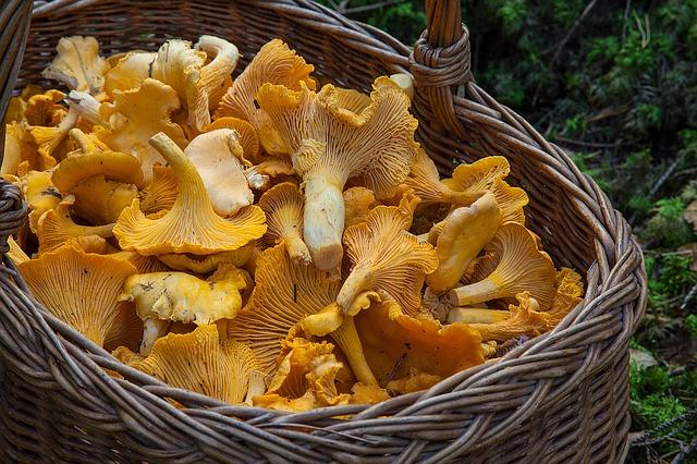 Una cesta llena de fungus